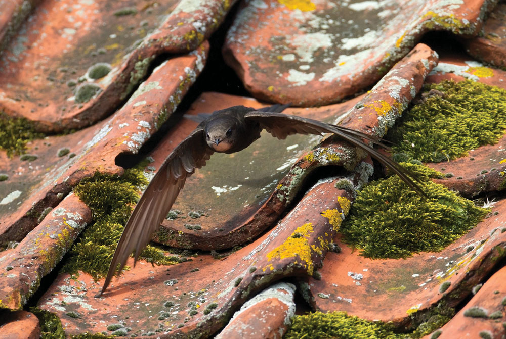 Interested in Swifts?