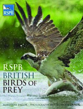 Rspb British Birds Of Prey By Marianne Taylor British Birds