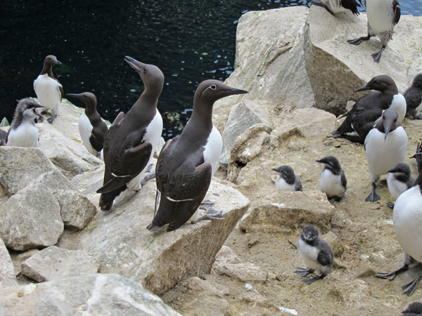 Plenty of fish in the sea? Seabird breeding highlights impact of commercial fisheries in the North Sea