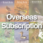 BB_Subscription-overseas