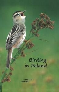 birding_in_poland-2