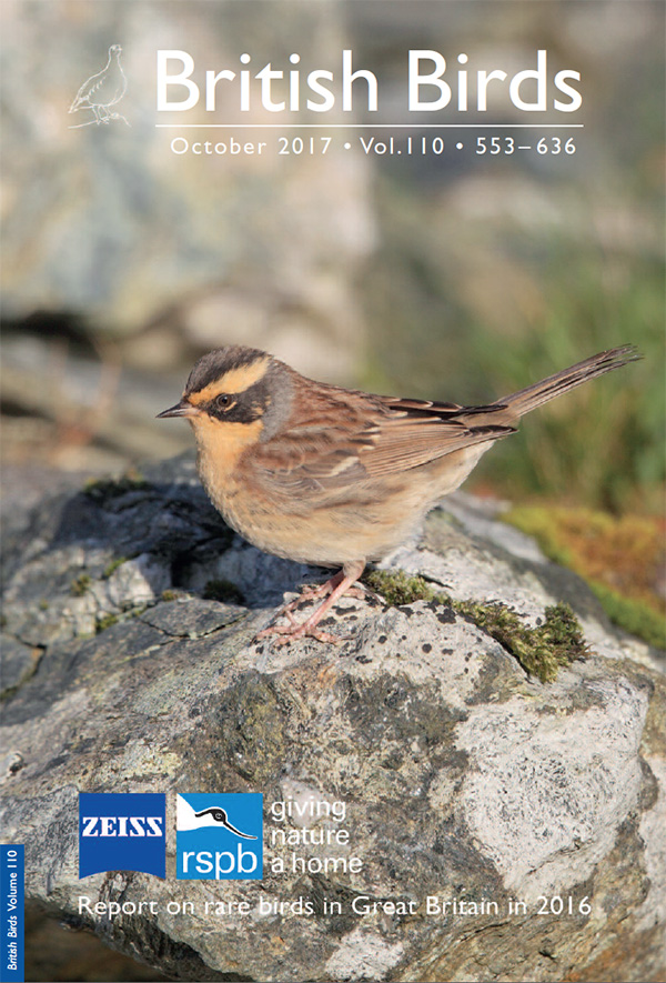 Report on rare birds in Great Britain in 2016 - British Birds