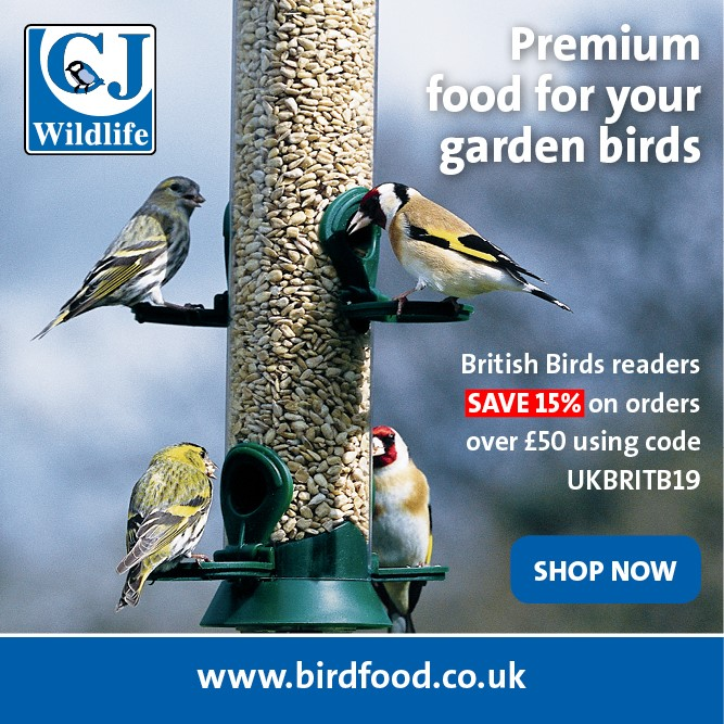 birdfood.co.uk advert